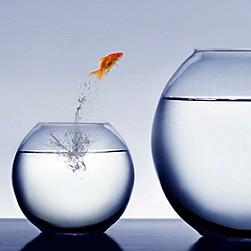 fisch springt aquarium xs web © Mikael Damkier - Fotolia